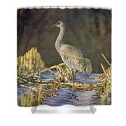 Colorado Sandhill Crane  Shower Curtain