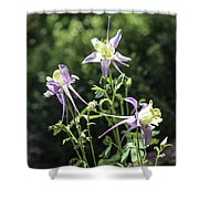 Colorado State Flower Shower Curtain