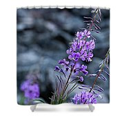 Colorado Wildflower Shower Curtain