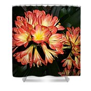 Colorburst Shower Curtain