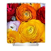 Colored Buttercup Flowers Shower Curtain