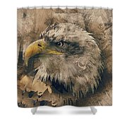 Colored Etching Of American Bald Eagle Shower Curtain
