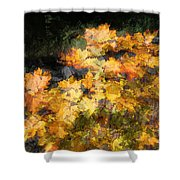 Colored Maple Leaves Shower Curtain