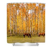 Colorful Autumn High Country Landscape Shower Curtain