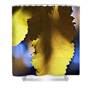 Colorful Autumn Leaf Shower Curtain