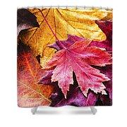 Colorful Autumn Leaves Closeup Shower Curtain