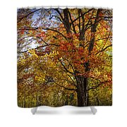 Colorful Autumn Tree In Southwest Michigan By Gun Lake Shower Curtain