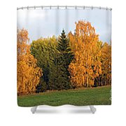 Colorful Autumn - Trees In Autumn Shower Curtain