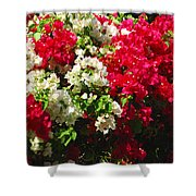 Colorful Bougainvilleas Shower Curtain