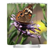 Colorful Butterfly On Daisy Shower Curtain