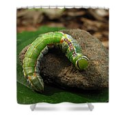 Colorful Caterpillar  Shower Curtain