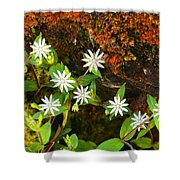 Colorful Chickweed Shower Curtain