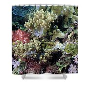 Colorful Coral Reef Shower Curtain