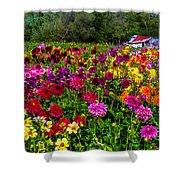 Colorful Dahlias In Garden Shower Curtain