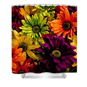 Colorful Daisies Shower Curtain