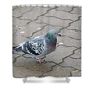 Colorful Dove Shower Curtain