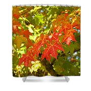 Colorful Fall Leaves Red Nature Landscape Baslee Troutman Shower Curtain