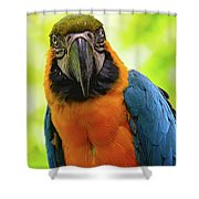 Colorful Gaze Shower Curtain