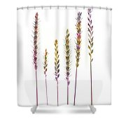 Colorful Grasses  Shower Curtain