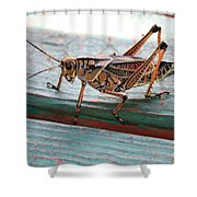 Colorful Grasshopper Shower Curtain