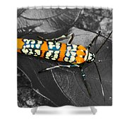 Colorful Insect - Ornate Bella Moth Shower Curtain