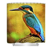 Colorful Kingfisher Shower Curtain