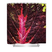 Colorful Leaf By Mother Nature Shower Curtain