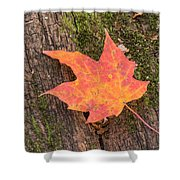 Colorful Leaf Shower Curtain