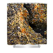 Colorful Lichens Shower Curtain