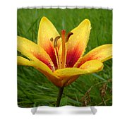 Colorful Lily Dew Drops Shower Curtain