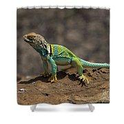 Colorful Lizard Shower Curtain