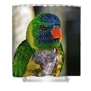 Colorful Lorikeet Shower Curtain