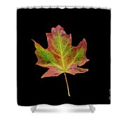 Colorful Maple Leaf Shower Curtain