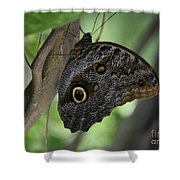 Colorful Markings On A Blue Morpho Butterfly On A Tree Trunk Shower Curtain