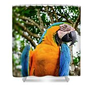 Colorful Nature Shower Curtain