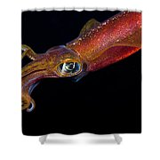 Colorful Oval Squid Shower Curtain by Dave Fleetham - Printscapes