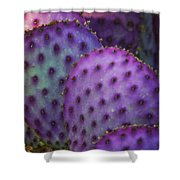 Colorful Rainbow Of Cactus Pads  Shower Curtain