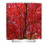Colorful Red Orange Fall Tree Leaves Art Prints Autumn Shower Curtain