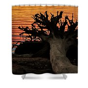 Colorful Roots Shower Curtain