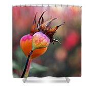 Colorful Rose Hips Shower Curtain