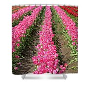 Colorful Rows Of Tulips Shower Curtain