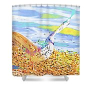 Colorful Seagull Shower Curtain