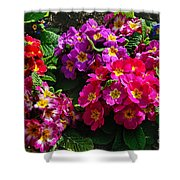 Colorful Spring Primrose By Kaye Menner Shower Curtain