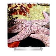 Colorful Starfish Shower Curtain