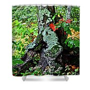 Colorful Stump Shower Curtain