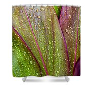 Colorful Ti Leaves Shower Curtain