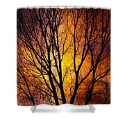 Colorful Tree Silhouettes Shower Curtain