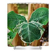Colorful Tropical Foliage 1 Shower Curtain