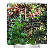 Colorful Tropical Plants Shower Curtain
