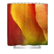 Colorful Tulip Closeup Abstract Shower Curtain
